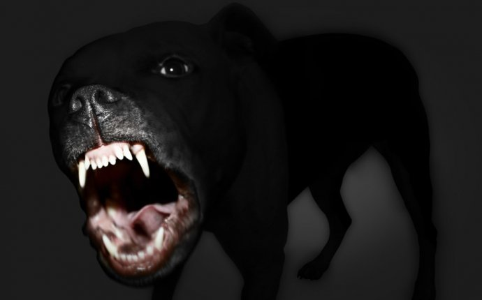 Dream meaning dog attacking you Archives - Islamic Dream