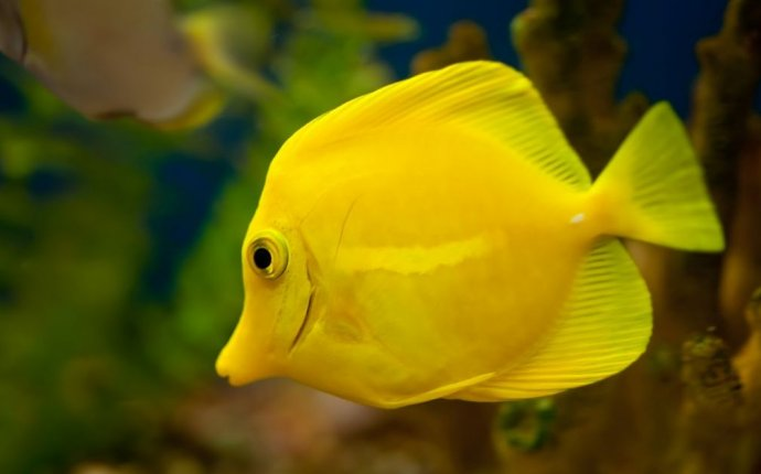 Dream Meaning of Fish | Dream Interpretation - DreamInterpretation.co