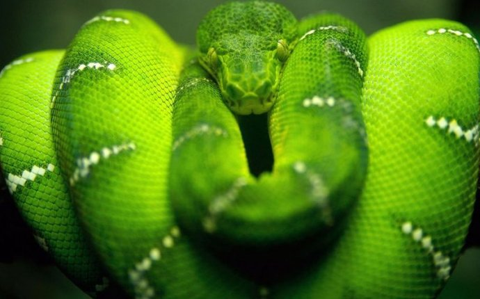 Green snake in dream interpretation
