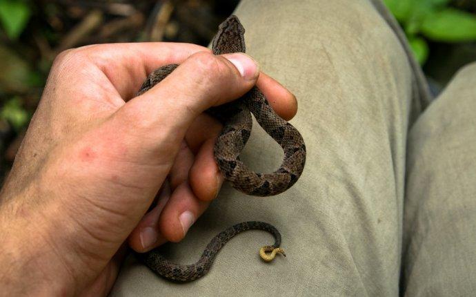 Snake | Dream Interpretation